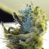 Cleaning Marijuana Pipes