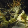 Oldest Marijuana Stash Ever Found